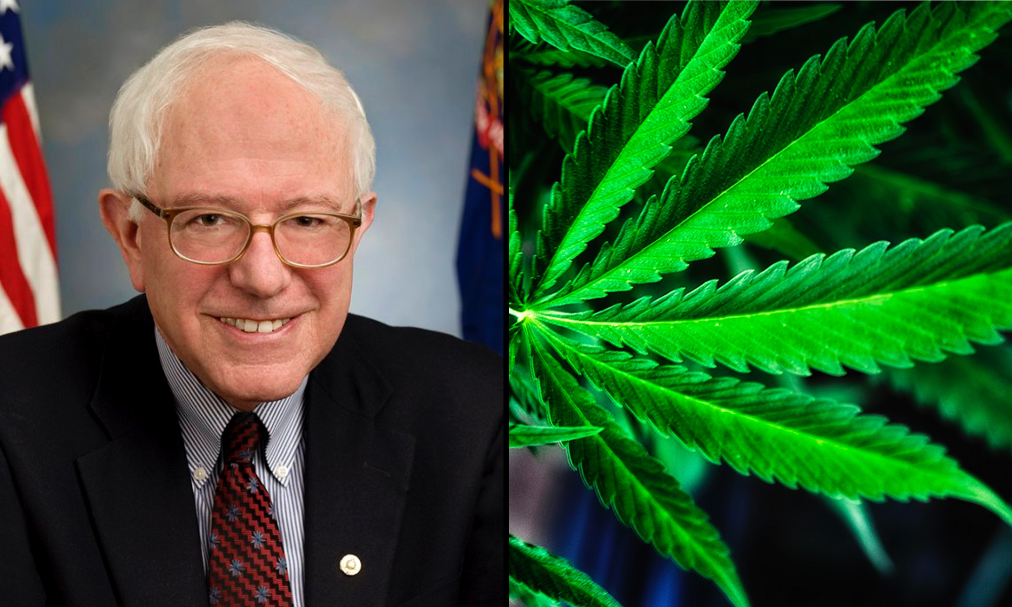 LATEST NEWS ABOUT CANNABIS