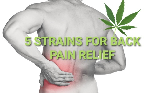 The Best Quality Marijuana For Pain